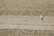 Albufera Nature Preserve, Heron