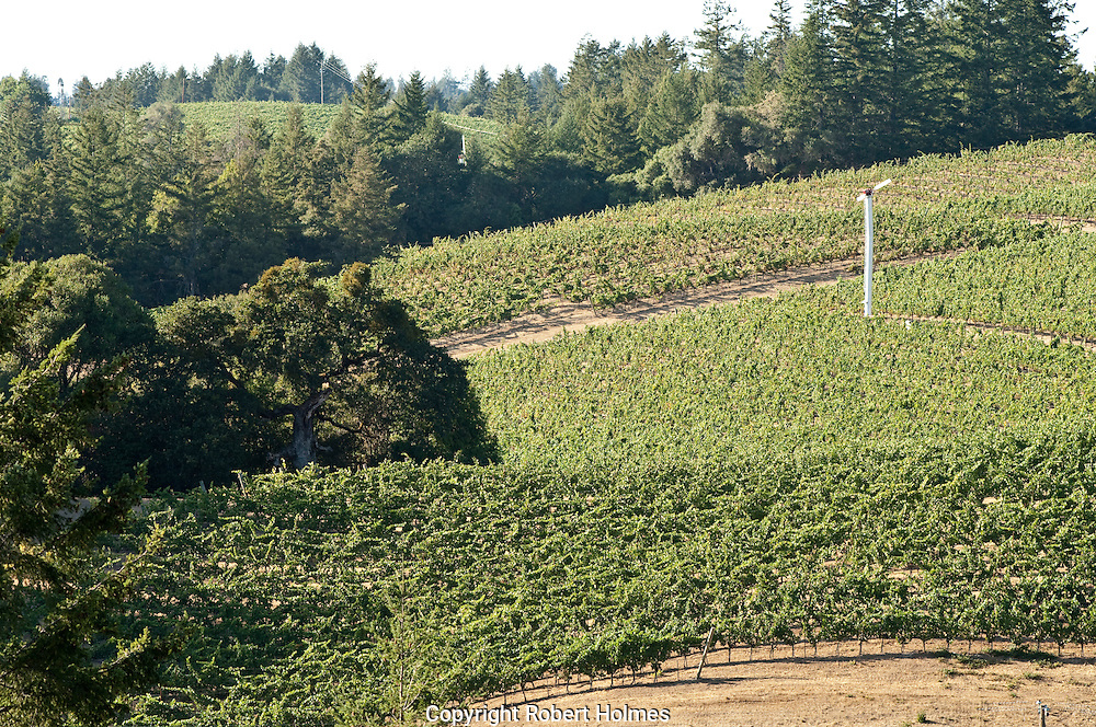Confluence Vineyard, Philo, Mendoocino County