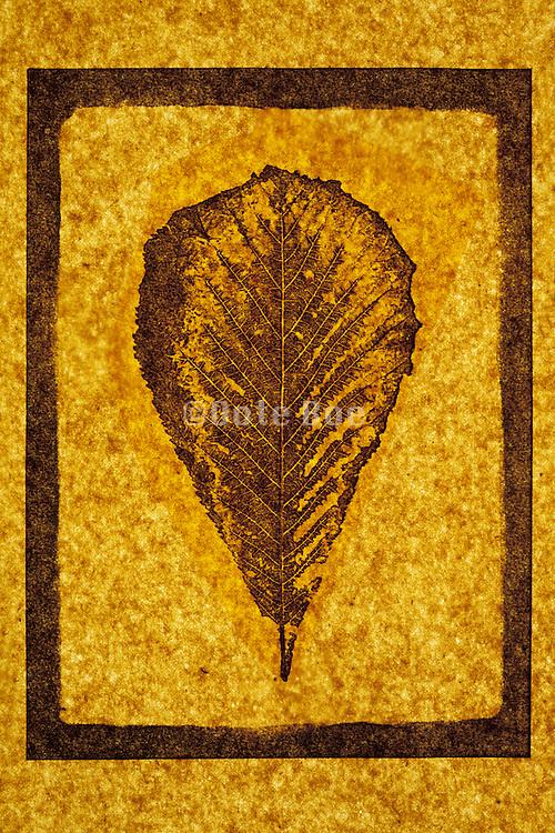 Print of a leaf