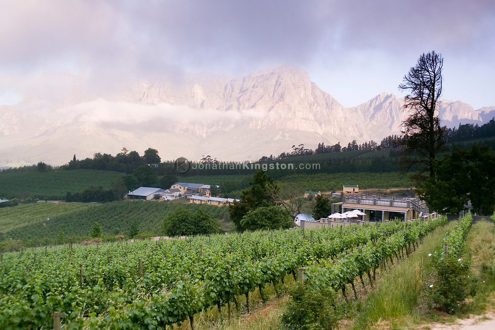 The wine vineyards of Clouds Estate, situated below the Drakenstein mountains in the Banhoek Valley, near the towns of Stellenbosch and Franschhoek, South Africa. The wine country in South Africa is well known, and is visited by many international tourists.