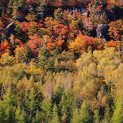 """Autumn Color on Cliff Drive"" <br />