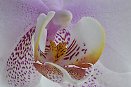 Orchid macro March 2, 2015, from Lou's family January 2014; captured March 2, 2015
