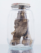 A glass jar with two fossilized rodents.
