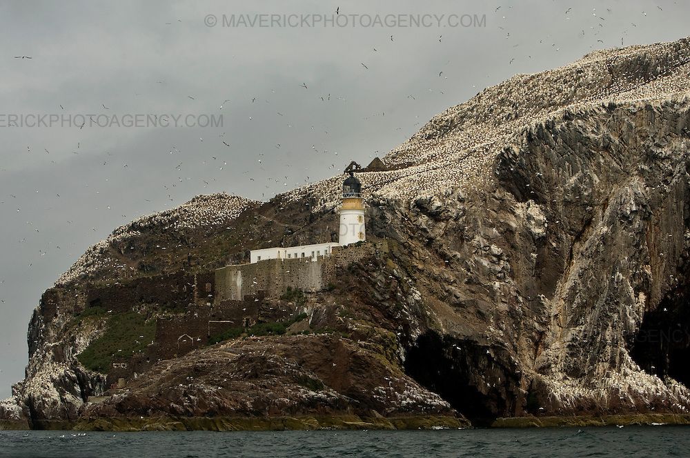 General view of Bass Rock in the River Forth. Scotland, UK..Picture Michael Hughes/Maverick ..THE GANNET is Britain's largest seabird with a wing span of just under two meters. From January onwards 140,000 Atlantic gannets return to the Bass Rock, the world's largest single rock gannet colony. Returning to the same mate and the same nest every year, they spend most of the year on the Bass, until the end of October, when the last chicks set out on their long journey down to the West Coast of Africa, with the adults returning again in January.....