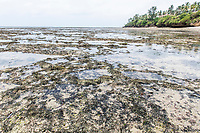 Exposed intertidal flats and sea grass beds, Mombasa Marine Protected Area, Kenya