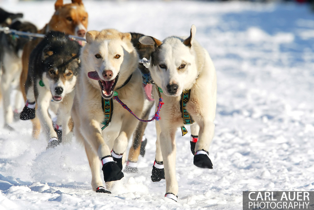 3/4/2007:  Willow, Alaska -  The lead dogs for Rookie Jon Korta of Galena, AK head out for the 35th Iditarod Sled Dog Race