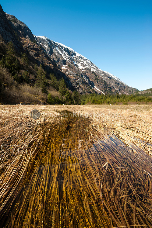 Snowmelt floods a low lying grassy plain in the Endicott Arm Fjord, Alaska.