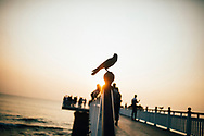 A crow clings on a pole along a pier at Galle Face Green, Colombo, Sri Lanka, Asia