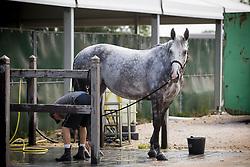 Moffitt Emily, GBR, Jackass 111<br /> Knokke 2018 Summer Circuit week 2<br /> © Hippo Foto - Sharon Vandeput<br /> 13/07/18