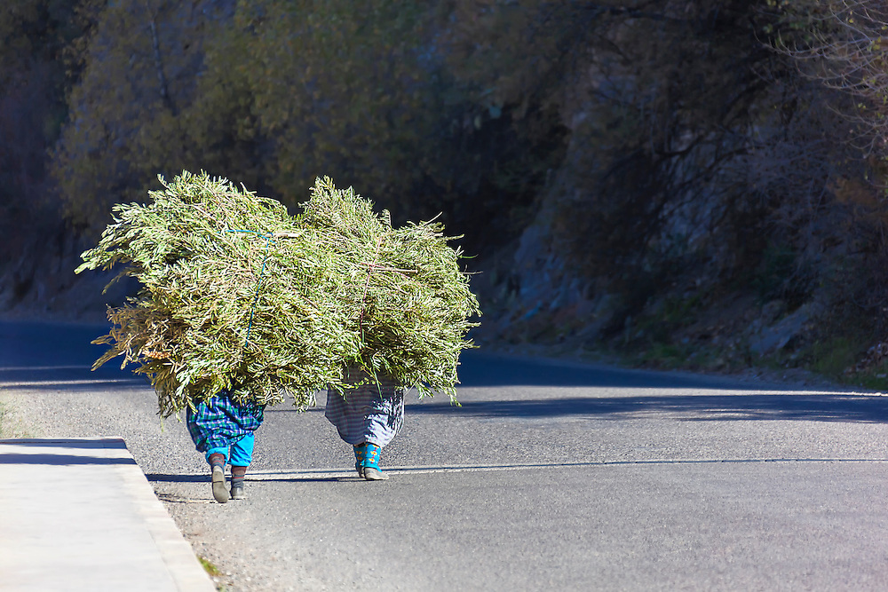 Two farmer women carying a load of branches along a road in Tizi-n-Test, Morocco.