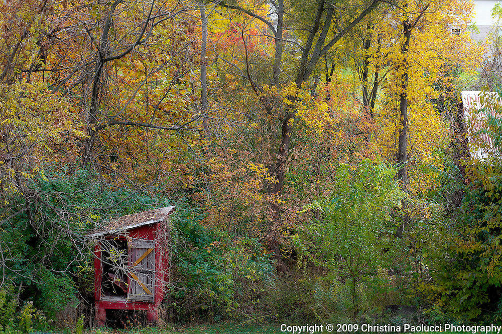 fall colors on an old chicken coupe in Erlanger, Kentucky. (Christina Paolucci, photogrpaher).