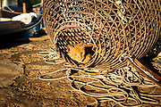 Cat in a fishing net, Soline, Mljet Island National Park, Dalmatia, Croatia