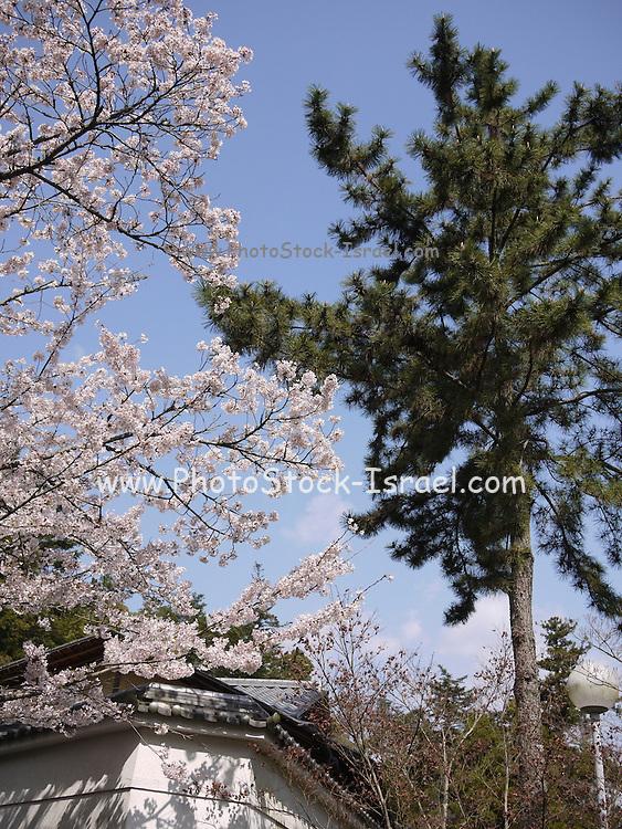 Japan, Miyajima, Itsukushima Temple