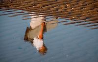 Reflection of Irene a puddle on Omaha Beach, France.jpg