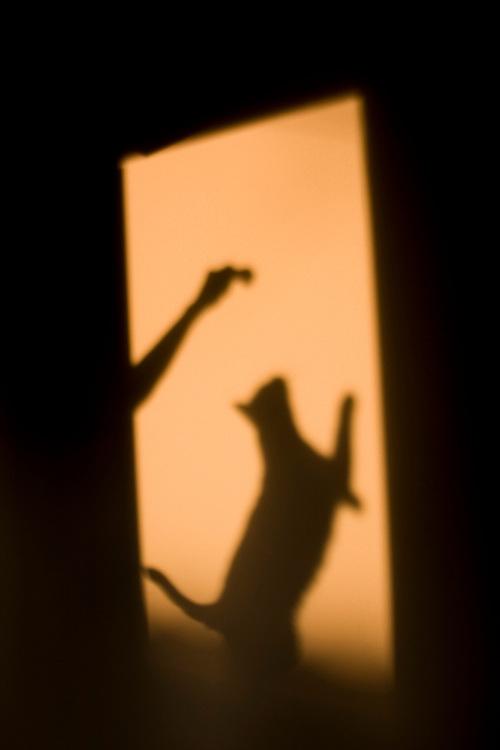 Sao Paulo_SP, Brasil...Sombra de uma mao brincando com um gato...Shadow of hand playing with a cat...Foto: MARCUS DESIMONI /  NITRO