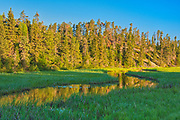 Morning light on Log Creek<br />