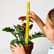 A girl uses a ruler to measure the height of a plant.