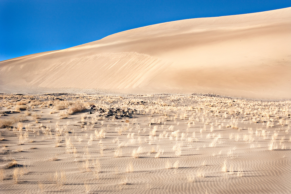 Early Morning Light on Nye County Dunes, Nevada