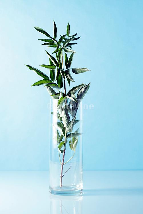 green leaf twig placed in a vase