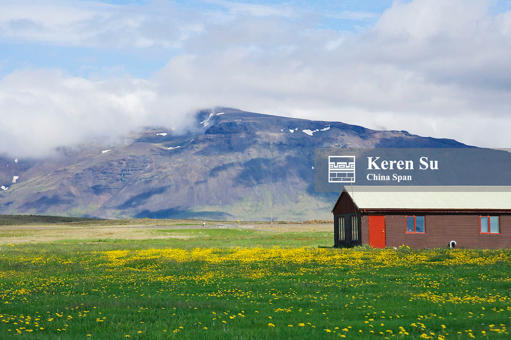 House on the meadow of wild flowers, Iceland