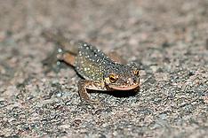 Ronnie Reptile