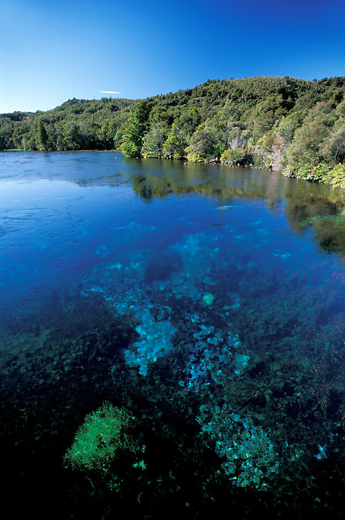 Waikoropupu Springs near Takaka, Takaka Valley, South Island, New Zealand