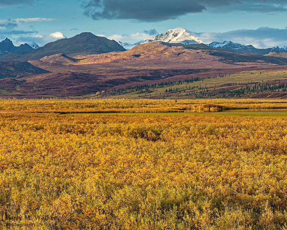 Autumn Tundra near Maclaren River along Denali Highway; Clearwater Mountains backgnd; Alaska