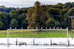 © Licensed to London News Pictures. 15/10/2019. Tadcaster UK. Birds sit on top of goal posts in the flooded pitch of Tadcaster Albion Football Club in Yorkshire today after days of heavy rainfall. Photo credit: Andrew McCaren/LNP