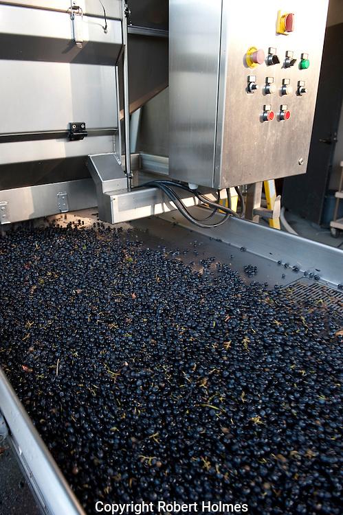 Processing merlot grapes at Duckhorn Vineyards, St. Helena, Napa Valley