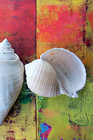 Beautiful seashells contrasted on deep pink and jewel tone color textures.