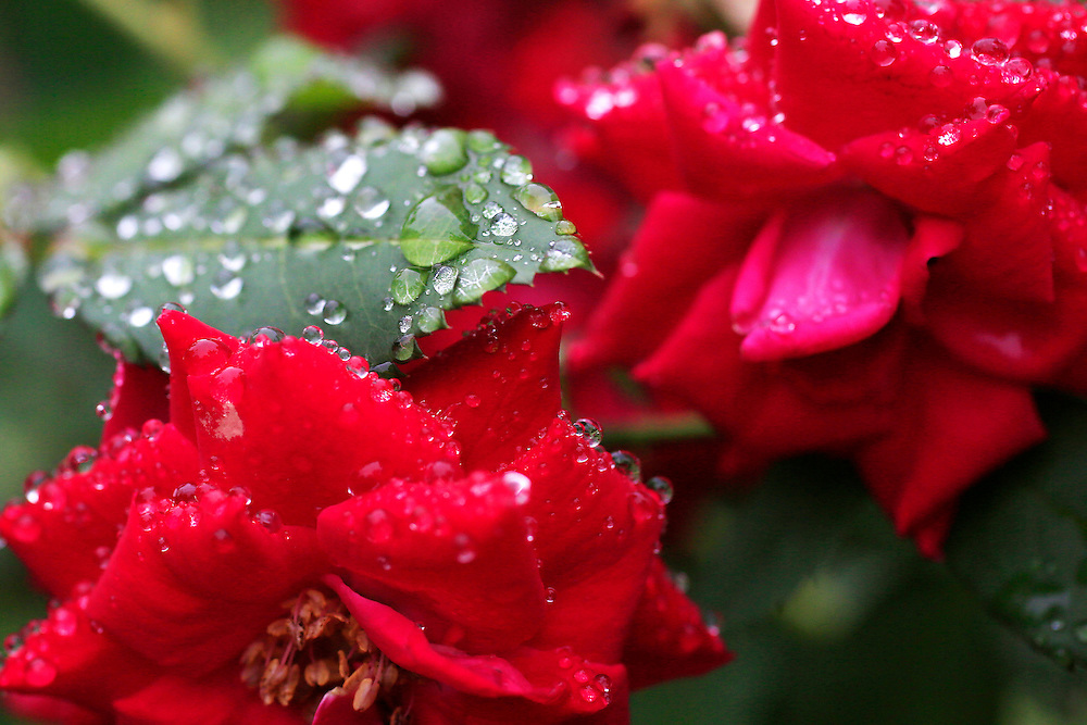 Wet Flowers<br /> <br /> Aug. 07, 2014