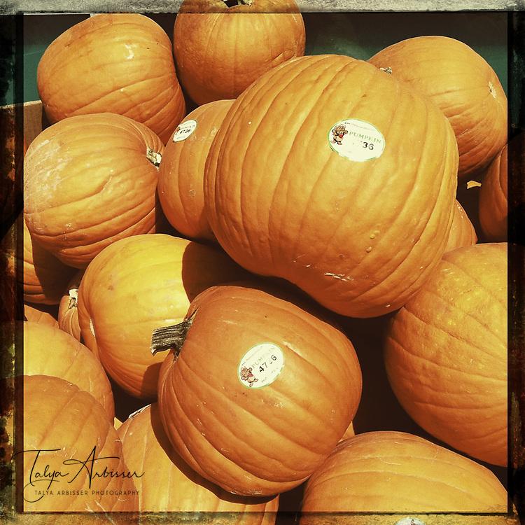 Pumpkins - Houston, Texas