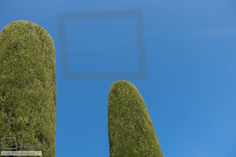 Thuja in garden, Sirmione on Lake Garda, Gardasee, Brescia, Lombardy, Italy, Sirmione