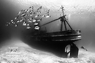 Commended, Underwater Photographer Of The Year 2016<br />