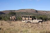 Addo Elephant Back Safaris
