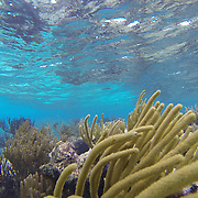 Snorkeling the reef at Grand Cayman Island North end.