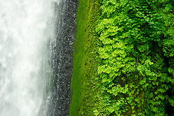 Detail image of Wahclella Falls, Oregon. One of the many falls along the Columbia River Gorge.