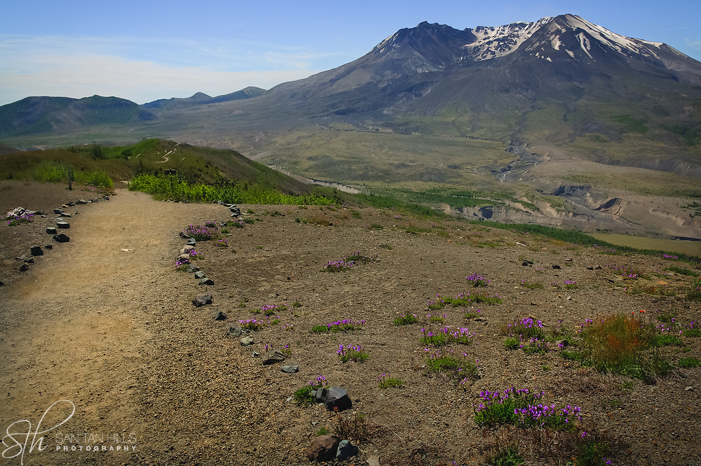 Trail to Mount St. Helens - WA