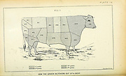 Beef cuts chart of London Butchers from Cattle and dairy farming. Published 1887 by Govt. Print. Off. in Washington. United States. Bureau of Foreign Commerce (1854-1903)