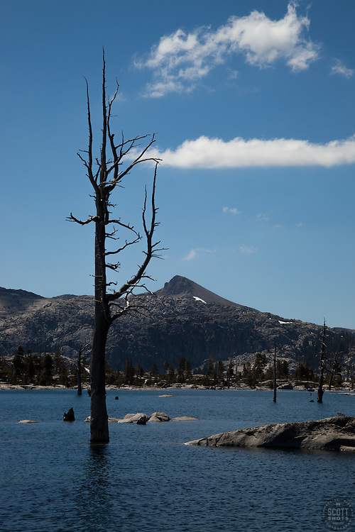 """Lake Aloha 9"" - Photograph of a dead tree at Lake Aloha in the Tahoe Desolation Wilderness."