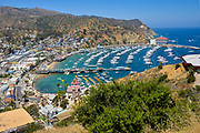 Downtown Avalon Bay Catalina Island
