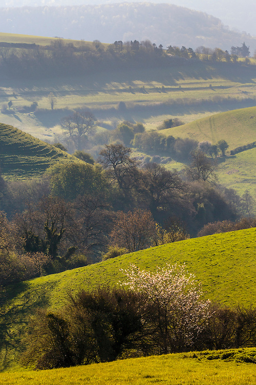 Rolling hills and marsh at St. Catherine Valley SSSI, Bath, South Glos, UK.
