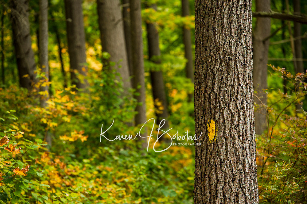 St Pauls's School Trails in the Fall.  ©2014 Karen Bobotas Photographer