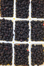 Picked blackberries