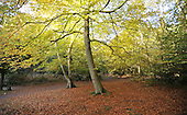 2010_10_25_Burnham_Beeches_SSI