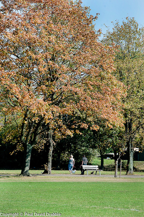 Ecclesfield Parks Lime Tree Avenue at one third of a mile long it has one tree planted for each Ecclesfield man who was killed in the great war of 1914-1918 and as such is a War Memorial. Originally planted in the 1920's there were 53 trees...29 September 2011.© Paul David Drabble