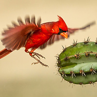 Perching Birds, Part 3