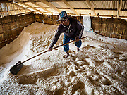 28 MARCH 2018 - BAN LAEM, PHETCHABURI, THAILAND: A warehouse worker rakes salt during the 2018 salt harvest in Petchaburi province, about two hours south of Bangkok. Sea salt is made in provinces south of Bangkok by flooding fields with ocean water after the rainy season. As the fields dry out from evaporation, workers go into the fields and gather the salt left behind.          PHOTO BY JACK KURTZ
