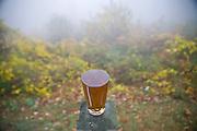 Tea on a misty mountain.