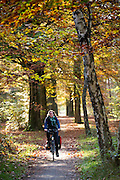 Bij Austerlitz geniet een vrouw op een fiets van het mooie herfstweer.<br /> <br /> Cyclists enjoy the beautiful autumn weather in the woods near Zeist.